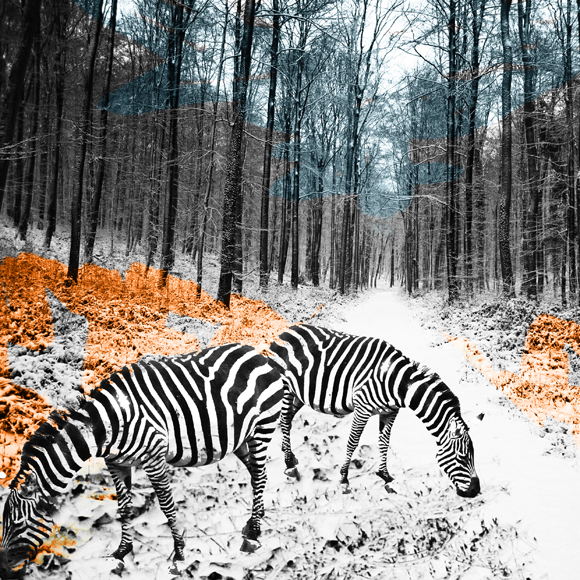 zebre copy